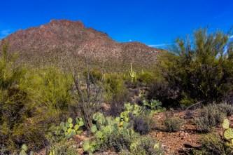 Arizona_Tucson_Saguaro National Park0730