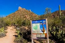 Arizona_Tucson_Saguaro National Park0735