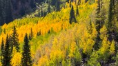 Maroon Bells_Crater Lake Trail at Maroon Bells-5742