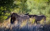 Big Horn Natl Recreation Area, Montana-0803