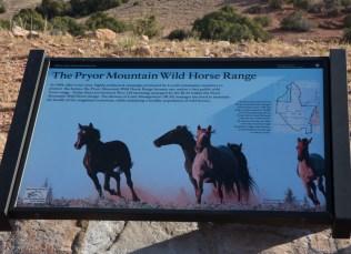 Big Horn Natl Recreation Area, Montana-7851
