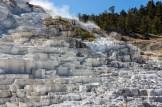 Yellowstone-Mammoth Hot Springs-7470