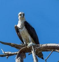 Cedar Key FL_Birds