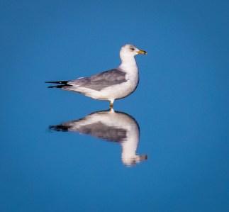 Cedar Key FL_Birds_1239