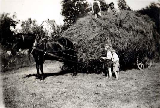 Høykjøring. Hanseløkken, Evje 1933. (Svaneveien)