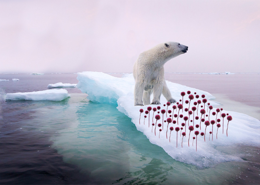 PROVAPOLARBEARS ICE
