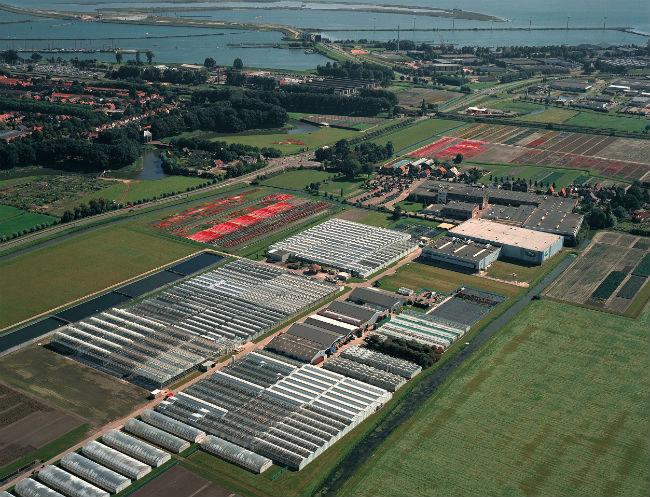 De regio Warmenhuizen-Enkhuizen in de kop van Noord-Holland is wereldleider in zaadveredeling. Beeld Syngenta Enkhuizen