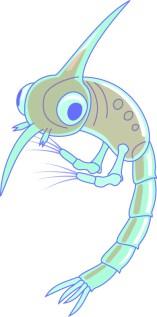 Larve de crabe