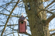 Nestbox for Great Tit or Blue Tit