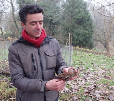 François very comfortable with a Common Kestrel (Falco tinnunculus, Faucon crécerelle)