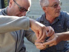 Jean-Marc Pons and Jean-Claude Thibault are fitting a geolocator on a Corsican spotted Flycatcher