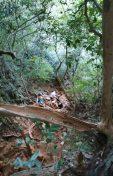Les sentiers escarpés de Railay, Thaïlande