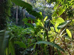 Le sentier dans la jungle entre Railay et Tonsaï