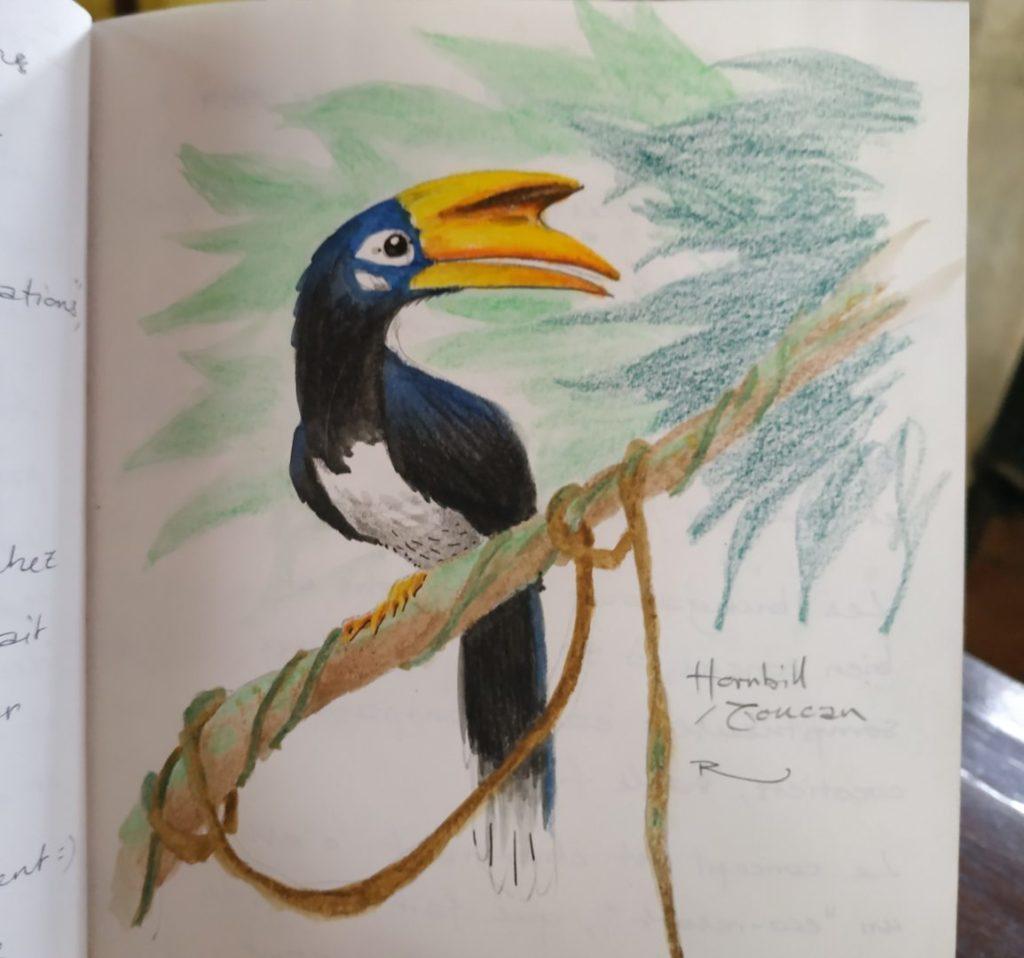 Toucan / Hornbill à Koh Phayam, Thailande