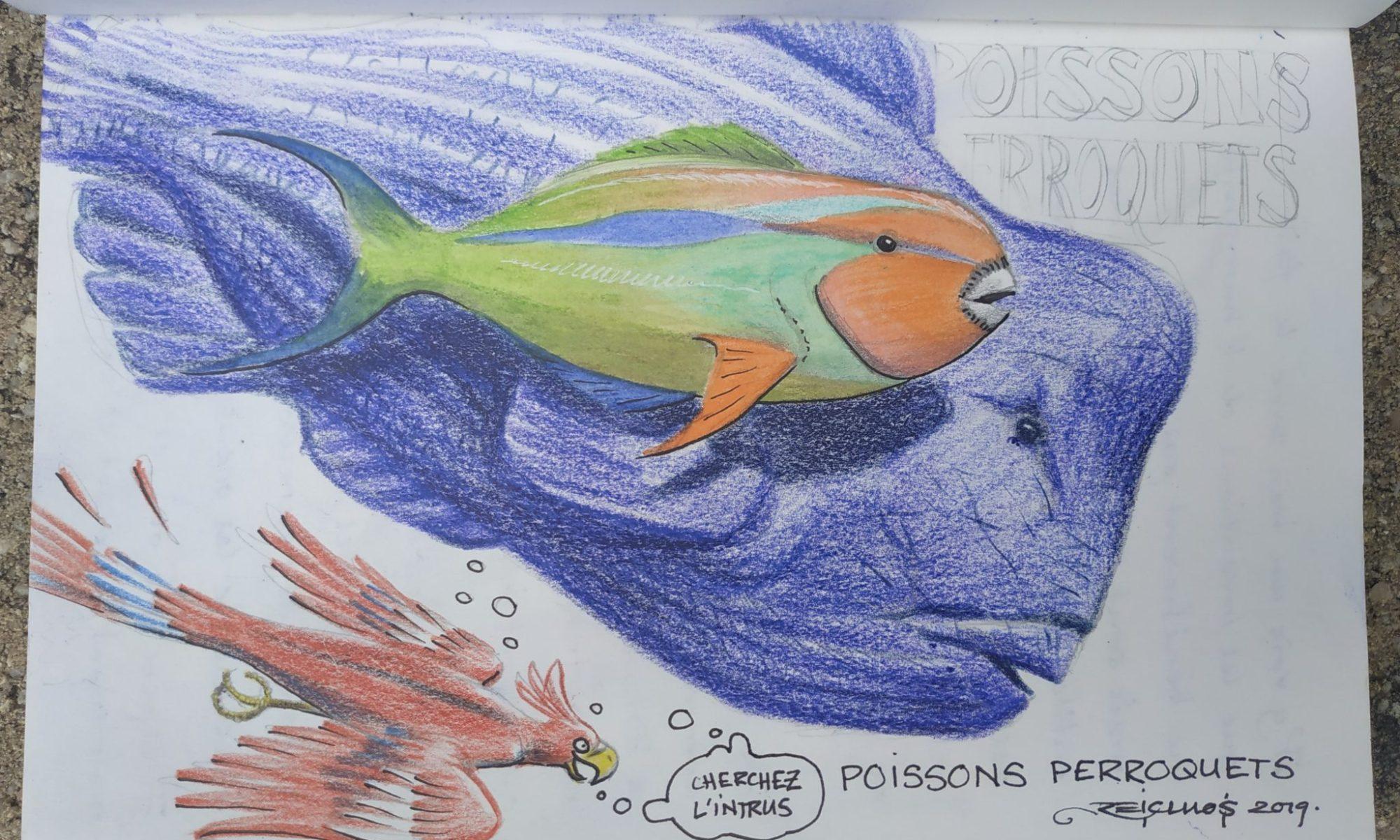 Iles Perhentian - Poissons clowns divers et variés (dessin)