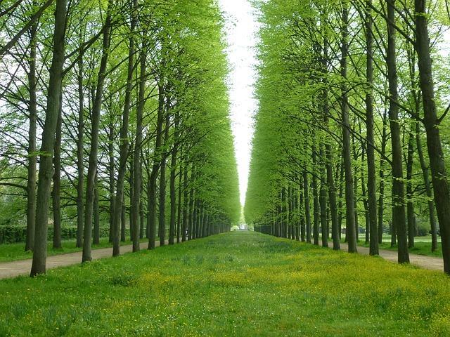 trees-340950_640