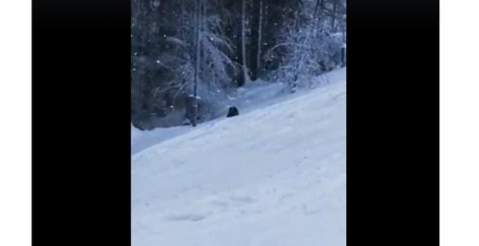 (Video) Un urs a fost filmat pe pârtia Clăbucet din Predeal, la câțiva metri de turiști 12