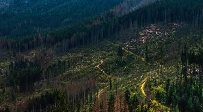 România, pentru că protejează hoții de lemne, avertisment dur de la Comisia Europeană: O lună pentru a lua măsurile necesare în tăierile ilegale de păduri 1