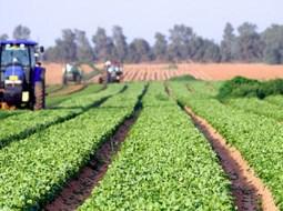 Ministrul Agriculturii: Cei sănătoși să iasă la câmp! Fiecare palmă de pământ trebuie lucrată. În toamnă s-ar putea să consumăm mai multe produse de-ale noastre 6