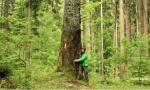 """Se taie la greu pădurile. Mugur: """"Mi-am luat la revedere de la bradul cu numarul 83 marcat pentru taiere in Parcul Natural Bucegi. Ei spun ca e legal, eu spun ca e prea mult"""" 42"""