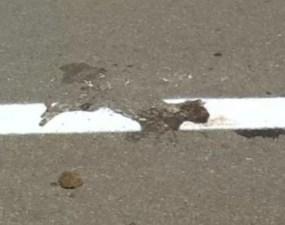 România a ajuns din nou în presa internațională. La Stampa despre cazul marcajului rutier trasat peste o pisică moartă în mijlocul unui drum: Imaginea care provine din România este un simbol al lipsei de sensibilitate și al unei cruzimi stupide 18