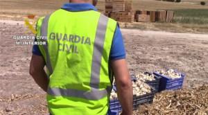 CASTILIA-LEON: Alţi 24 de muncitori români exploataţi în Spania, la cules de usturoi