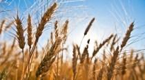 """Din """"colecţia ciudăţeniile lumii"""": o treime din fermele UE se află în România, însă ele reprezintă doar 3,4% din producţia blocului comunitar"""