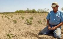 Recoltele din Spania şi Italia, devastate de cea mai gravă secetă din ultimele decenii