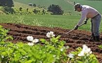 OFERTĂ DE MUNCĂ: muncitori în agricultură în Sevilla