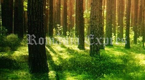 Păduri