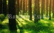 Câtă pădure mai are Uniunea Europeană şi care sunt ţările cu cea mai mare întindere de păduri?