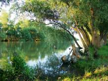 Flourishing Nature in the Danube Delta