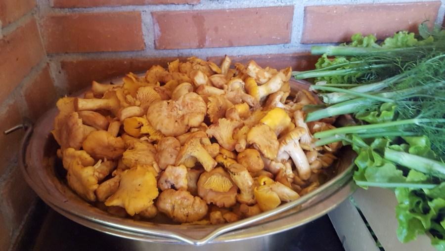 Romanian mushrooms