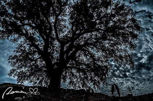 Novios bajo un árbol a contraluz.