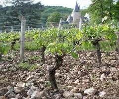 vineyards-4