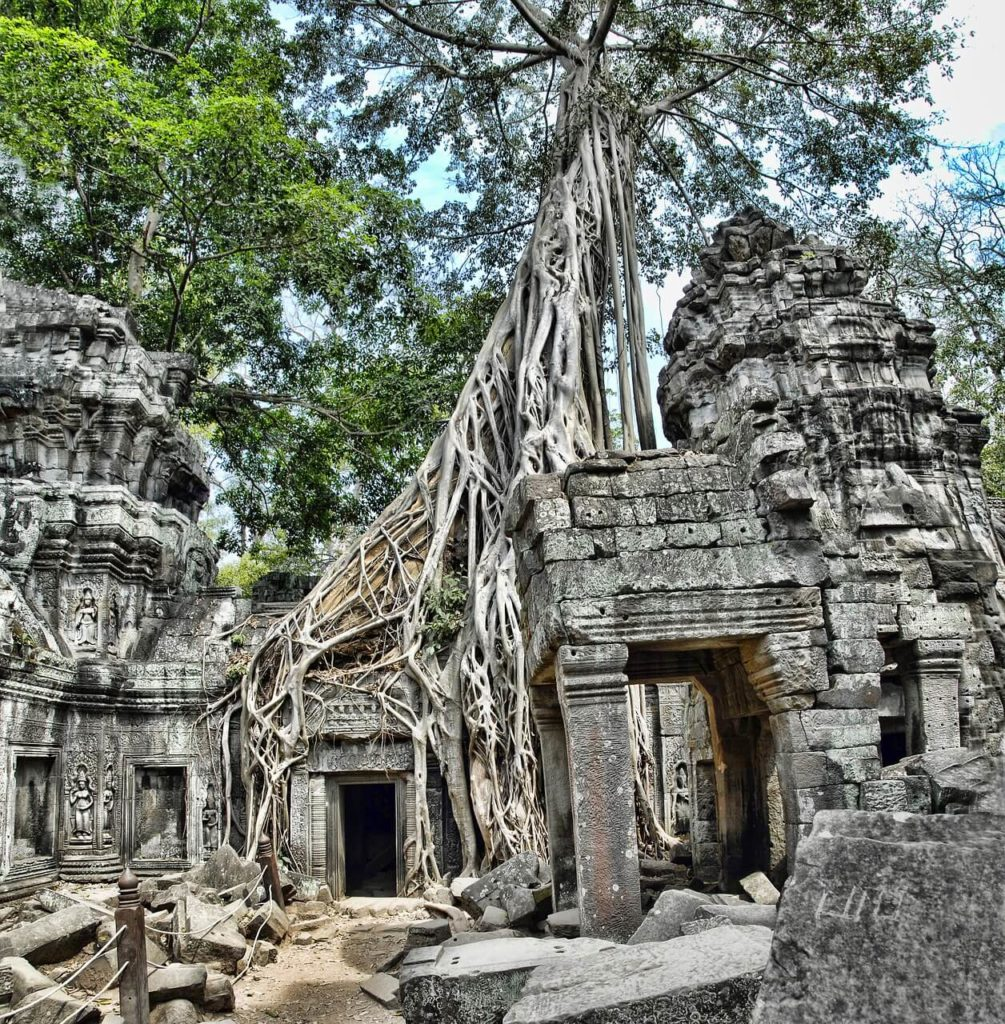 Huge tree growing on top of the old building in Ta Prohm, Siem Reap, things to do 5 days in Cambodia