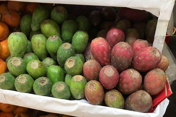 tuna-cactus-fruit