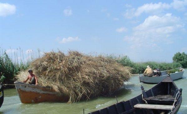 sacalinu-mare-danube-delta