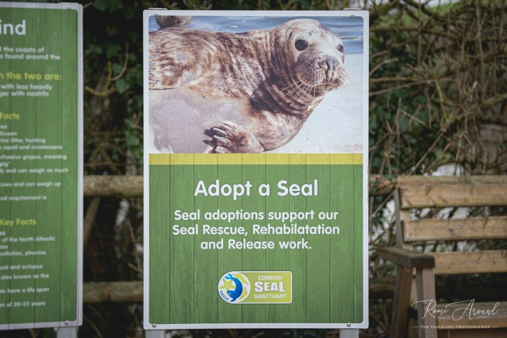 Seal Sanctuary Romi Around