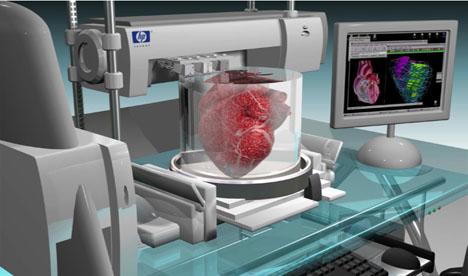 Risultati immagini per organi in vitro