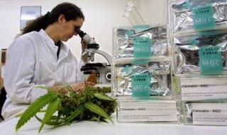 cannabidiolo la marijuana combatte il cancro