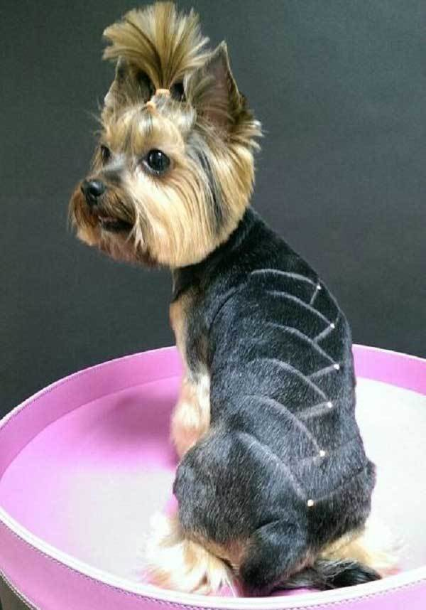 The Best 100 Yorkie Haircuts For Males Females Yorkshire Pictures