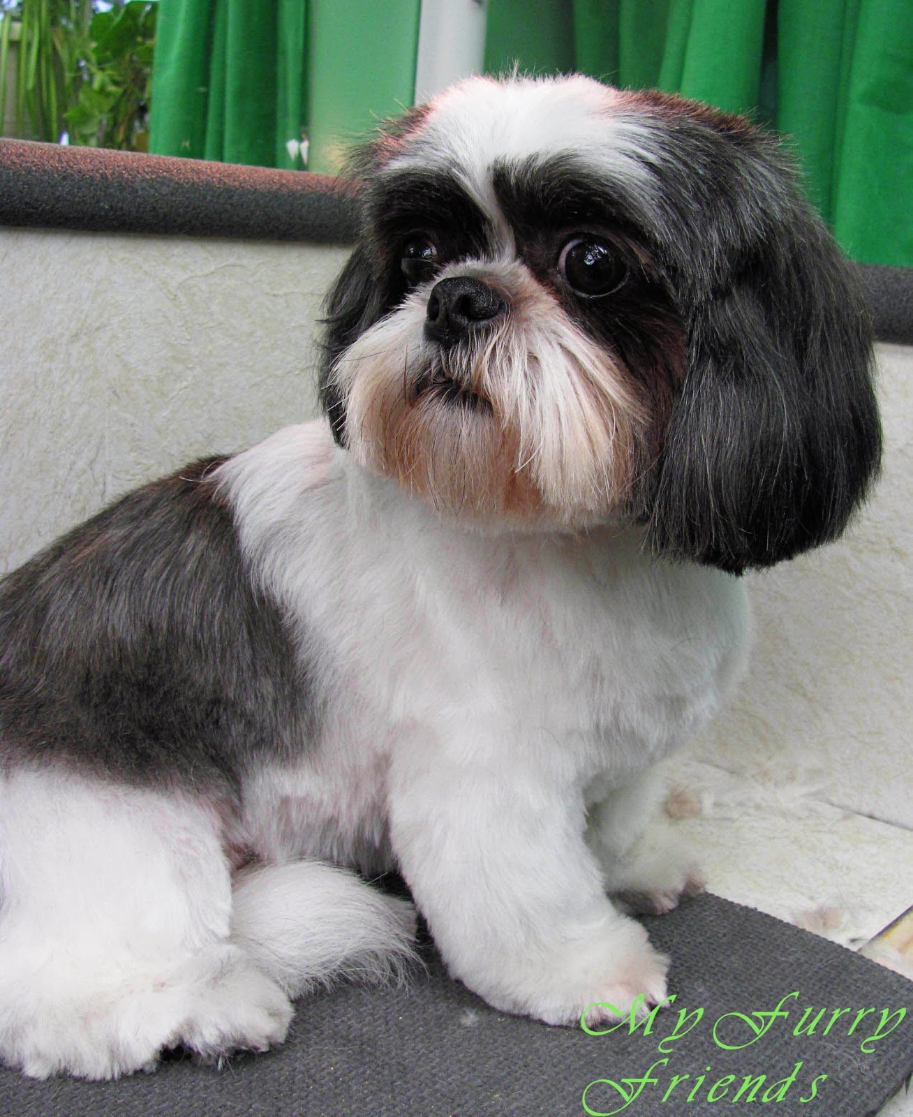 The Best Pet Grooming The Good The Bad The Furry Sc*Ss*R*Ng A Shih Tzu Head Pictures