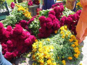 Baja producción en flores para temporada de muertos.2