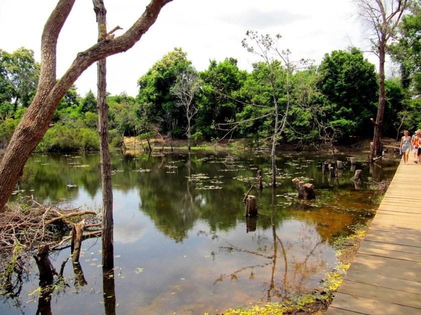 Natuur Angkor Cambodja