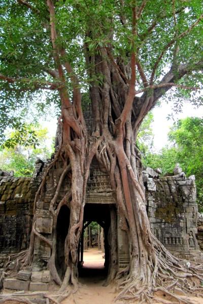 Bomen Angkor