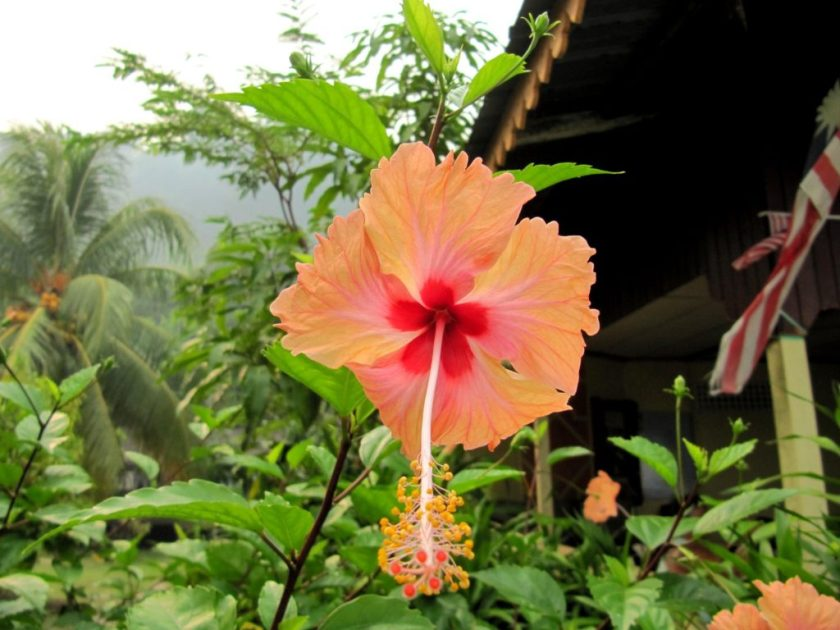 Tioman in Maleisië