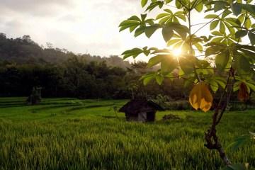 Rondreis Indonesië van Java naar Bali