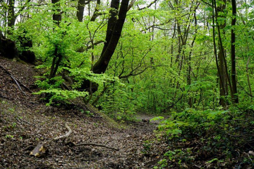 Bos bij Remagen