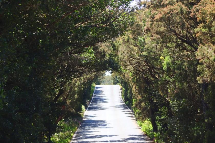 Rijd met de auto door Garajonay National Park op La Gomera